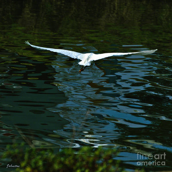 Painting - Flight Of The Egret by Bob and Nadine Johnston