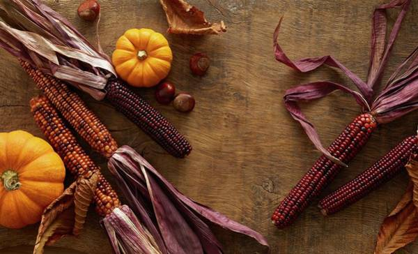 Indian Corn Photograph - Flint Corn And Pumpkins by Science Photo Library