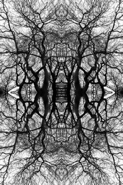Tree No. 11 Art Print