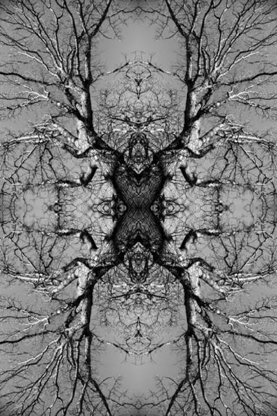 Tree No. 3 Art Print