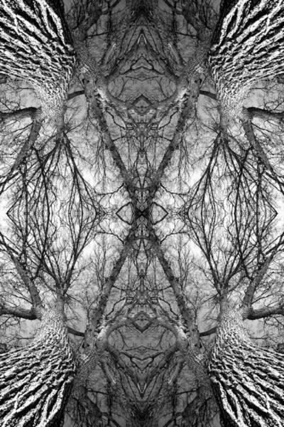 Tree No. 7 Art Print
