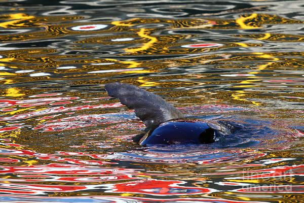 Photograph - Flipper Trip by James Brunker