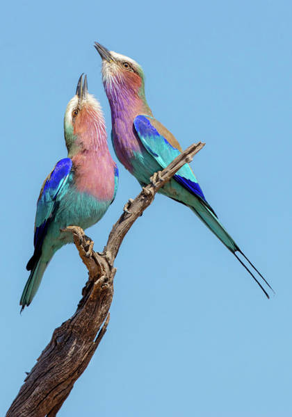 Pair Photograph - Flirting Rollers by Alessandro Catta