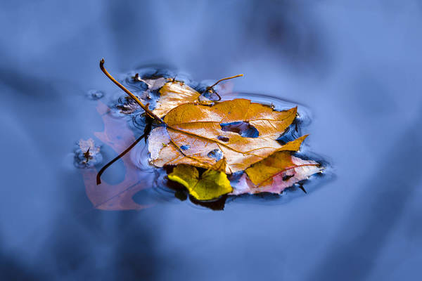 Photograph - Floaters by Robert Mitchell