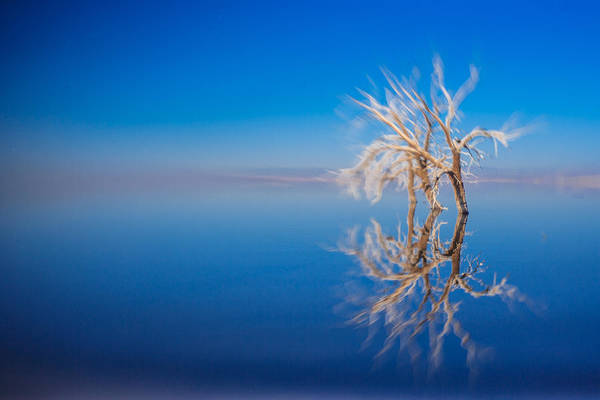 Photograph - Floating Deadwood by Scott Campbell