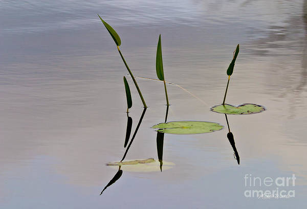Photograph - Floating Garden by Michelle Constantine