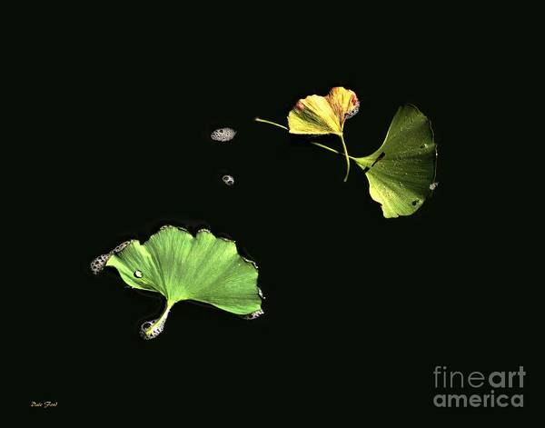 Digital Art - Floating Ginko Leaves by Dale   Ford