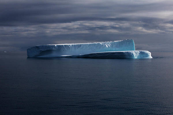 Wall Art - Photograph - Floating Icebergs In Antarctic Sound by Krystle Wright