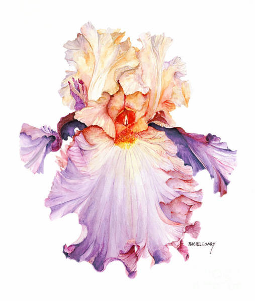 Painting - Floating Iris 2 by Rachel Lowry