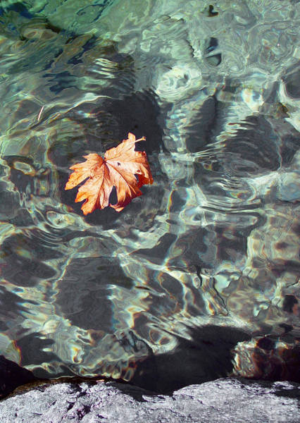 Anglin Wall Art - Photograph - Floating Leaf by Nathan Anglin