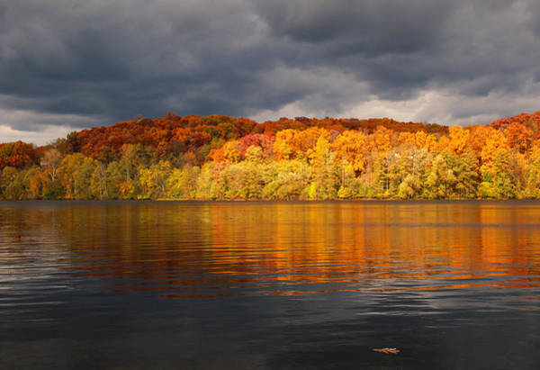 Photograph - Floating Oak Leaf by Rachel Cohen