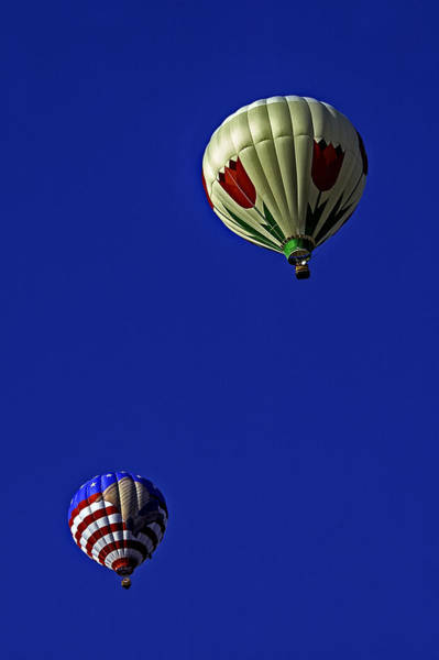 Photograph - Floating Pair by Andy Crawford