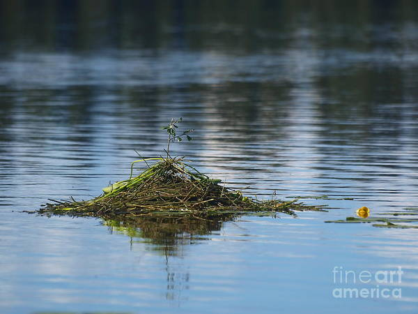 Photograph - Floating Reed Island by Vivian Martin