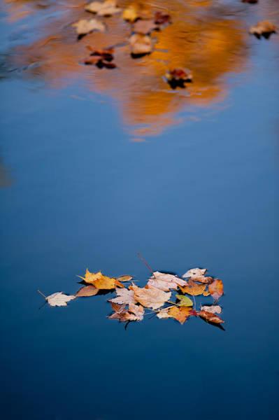 Photograph - Floating With Friends by Joye Ardyn Durham