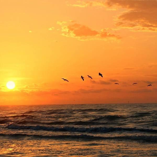 Photograph - Flock At Sunset by Candice Trimble