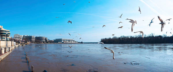 Potomac River Photograph - Flock Of Birds Flying At Old Georgetown by Panoramic Images