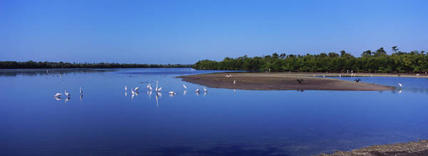 Ding Photograph - Flock Of Birds In Water, J. N. Ding by Animal Images
