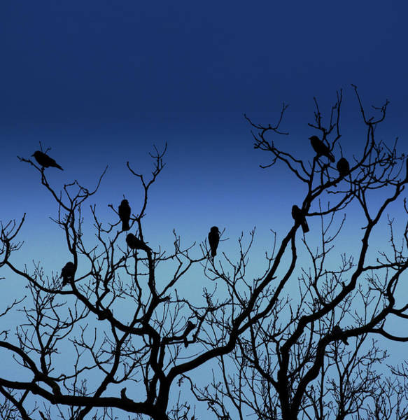 Bird In Tree Photograph - Flock Of Birds by Peter Chadwick Lrps