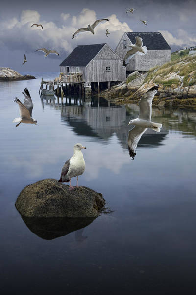 Photograph - Flock Of Gulls Flying By A Fisherman's Wharf In Peggy's Cove by Randall Nyhof