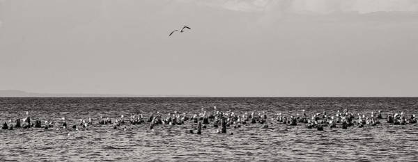 Photograph - Flock Of Seagulls In Black And White by Sebastian Musial