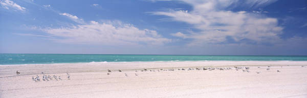 Sea Of Serenity Photograph - Flock Of Seagulls On The Beach, Lido by Panoramic Images