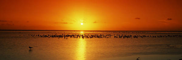 Birds Of Texas Photograph - Flock Of Seagulls On The Beach by Panoramic Images