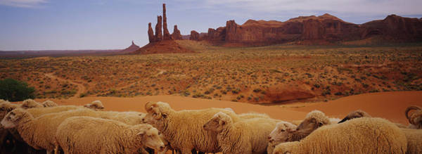 Wall Art - Photograph - Flock Of Sheep In An Arid Landscape by Animal Images