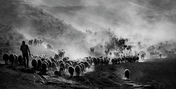Herd Photograph - Flocks by ?mm? Nisan