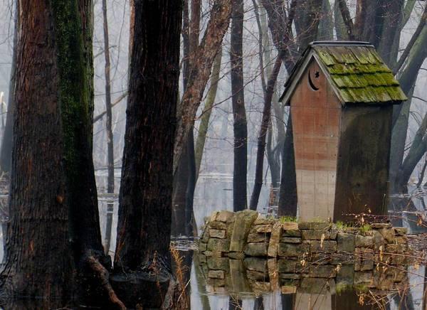 Foggy Swamp Outhouse Art Print