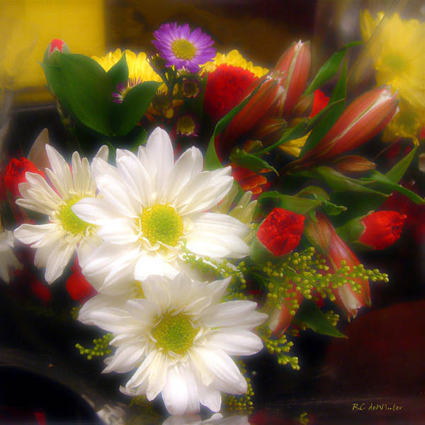 Photograph - Flora Radiant by RC DeWinter