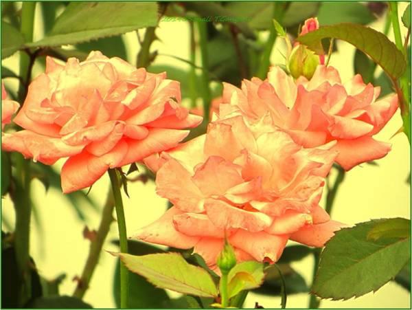 Greetingcards Photograph - Floral Bonding by Sonali Gangane