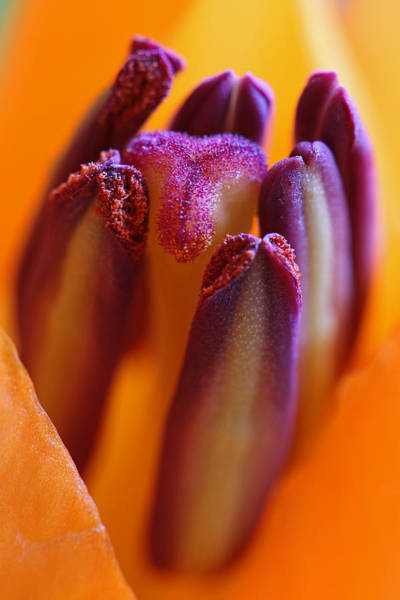 Photograph - Floral Celebrity by Juergen Roth