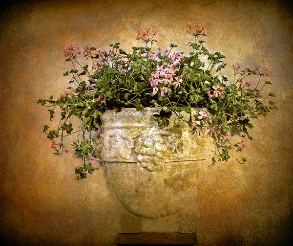 Wall Art - Photograph - Floral Fresco by Jessica Jenney