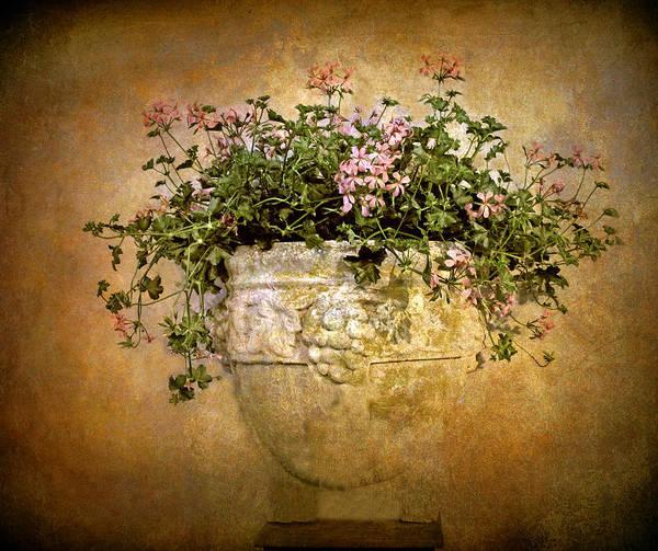 Fresco Wall Art - Photograph - Floral Fresco by Jessica Jenney
