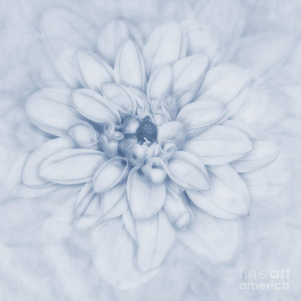 Wall Art - Photograph - Floral Layers Cyanotype by John Edwards