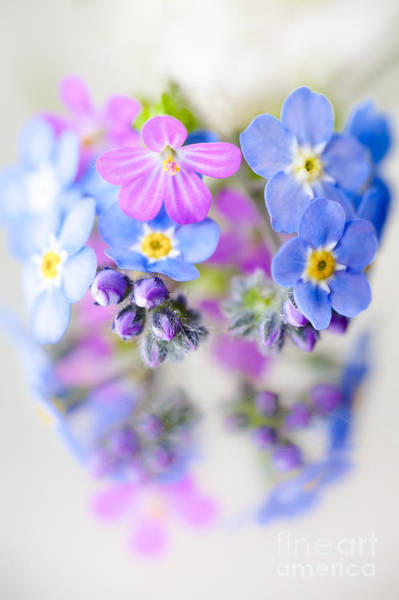 Forget Me Not Photograph - Floral Reflection by Jan Bickerton