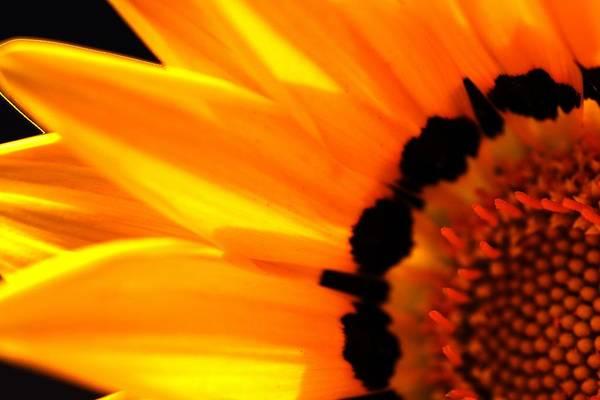 Photograph - Floral Surprise by David Rich
