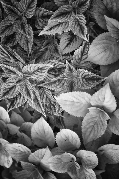 Floral Tones At Biltmore Art Print