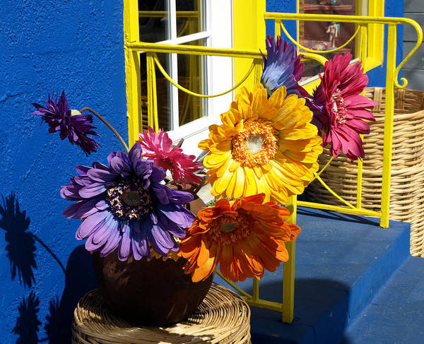 Photograph - Flores Colores by Gia Marie Houck