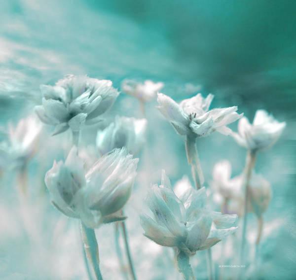 Flores Secas II Art Print