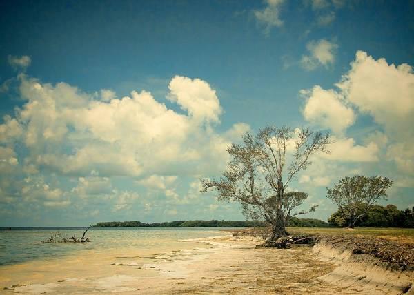 Photograph - Florida Bay 6947a by Rudy Umans