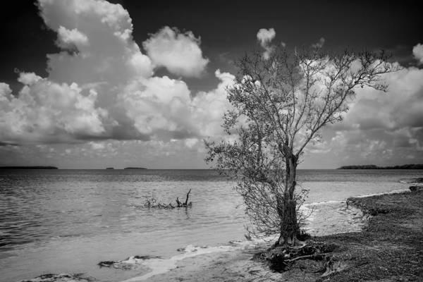 Photograph - Florida Bay 6953bw by Rudy Umans
