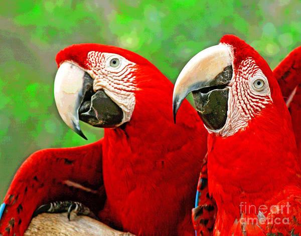 Photograph - Florida Birds by Larry Oskin