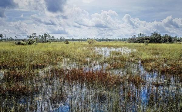 Photograph - florida Everglades 0177 by Rudy Umans