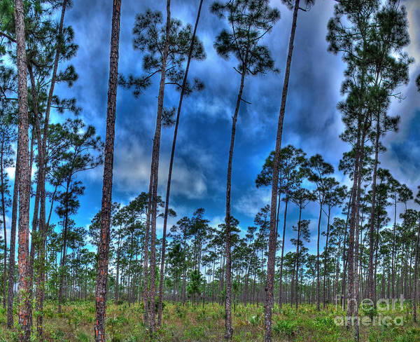 Everglades Photograph - Florida Everglades by Twenty Two North Photography