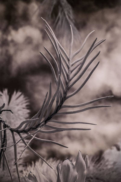 Pyrography - Florida Flora 1 by Ellie Perla