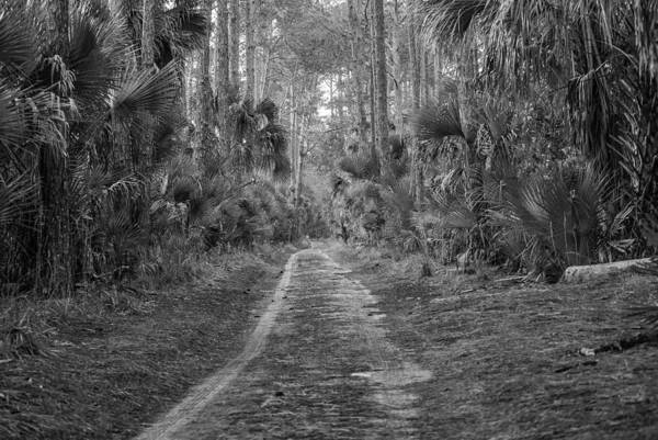 Photograph - Florida Forest  Lan 381 by G L Sarti