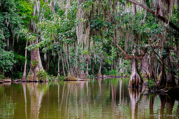Photograph - Florida Naturally 2 by Christopher Holmes