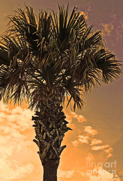 Photograph - Florida Palm by Melissa Sherbon