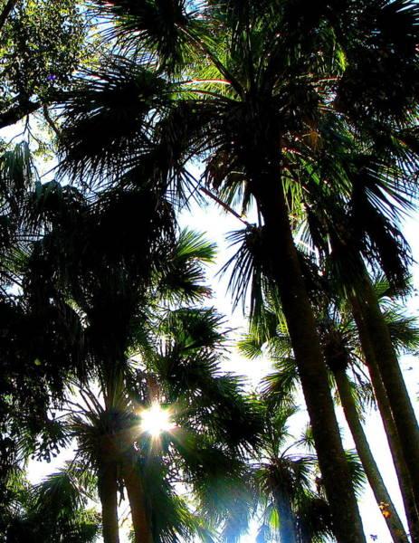 Photograph - Florida Palms by Jp Grace